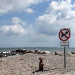 Hunde verboten!