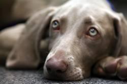 Hund Lisalotte