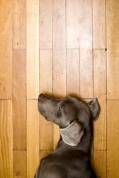 Hundepuppe