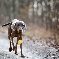 Der Hund auf den ich steh ...