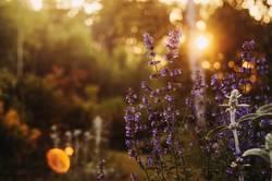 romantic evening floral summer backround.