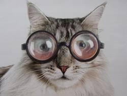 Ich glaube, die Brille steht mir nicht!