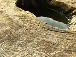wooden plateau I