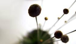 golden plant II