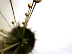 golden plant III