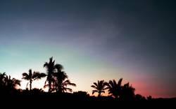Mit Morgenpalme blau am Strand