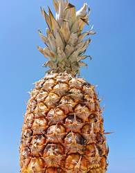 Low angle view of ripe pineapple on pastel blue sky background