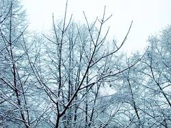 Winteräste