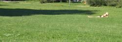 Bauchlage im Herrngarten
