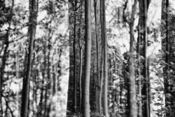 Wald und Wald