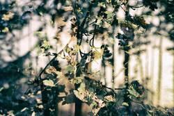 herblicher Wald