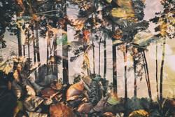 flammender Wald