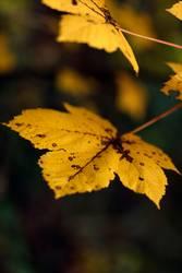 Es kommt der Herbst