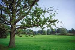 Park von Lenné