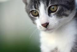 Blicke einer Katze