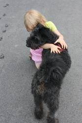 hund liebe 1