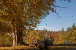 Bärensee 2013 | Stürmischer Herbst
