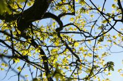 spring (-'break' kommt noch)