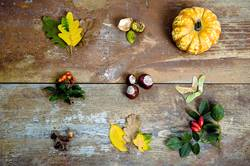 Herbst im Detail