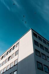 6 Vögel, 1 Gebäude