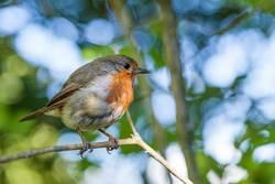 Der frühe Vogel …