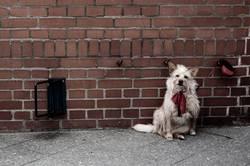 Brick-Dog