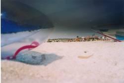 Luma Beach