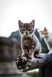 Miez, Miez - Kätzchen gehen immer Teil 2