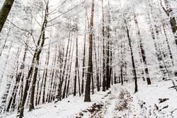 Wald einmal gepudert
