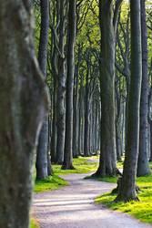 Der Weg durch den Gespensterwald