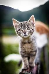 Miez, Miez - Kätzchen gehen immer - wenn sie so süüüüüß sind