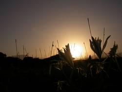 Sardischer Sonnenuntergang 2