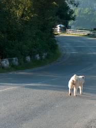 long road...
