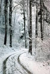 Wald Weg Winter