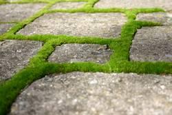 grüne Wege (3)