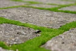 grüne Wege (1)