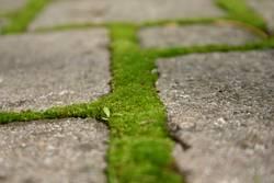grüne Wege (4)