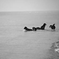 Vier Hunde beim Baden