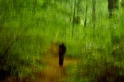Gestalt im Wald