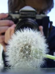 Der Fotograf mit der Pusteblume