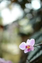 florale Neugierde