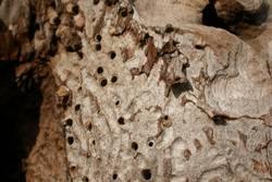 Termitenwerk
