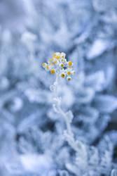 Frühlingserwachen in der Kälte