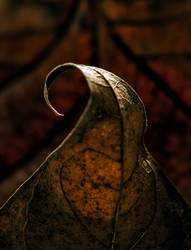 Herbstwelle