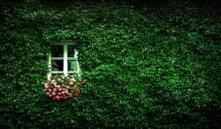 Ein blühendes Fenster