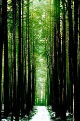 Waldlichtspiele, 3.Akt