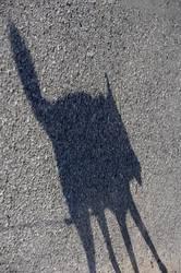 Schattenfuchs