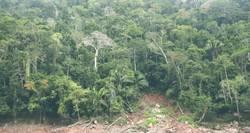 Regenwaldwand