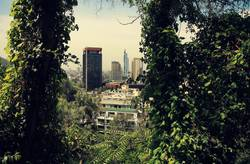 City-Jungle