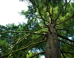 Ein Baum.Ein Geburtstagsbaum, liebe Frauke!